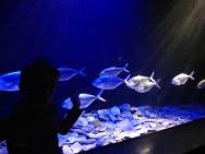 Lisbonne aquarium (52)