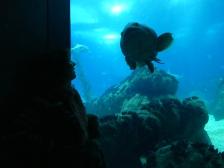 Lisbonne aquarium (86)