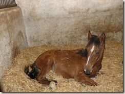 Haras Alter Real (29)