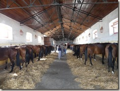 Haras Alter Real (43)