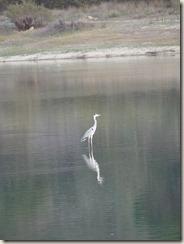 Lac Sao Mamede (24)