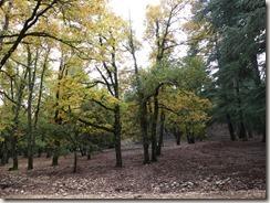 Autour d'Azrou - Route des cèdres (11)