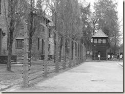 Auschwitz (100)