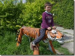Réserve de tigres (29)