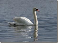 Topola, lac (1)