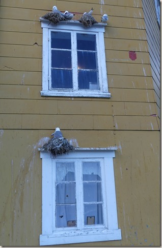 Iles Lofoten - Nusfjord (17)
