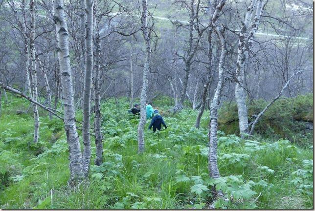 Parc National de Dovrefjell (28)