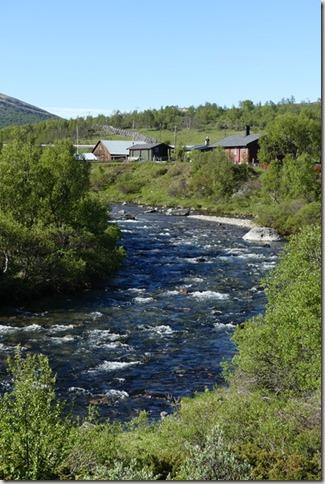 Parc National de Dovrefjell (31)