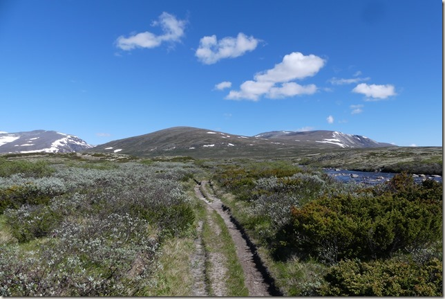 Parc National de Dovrefjell (33)