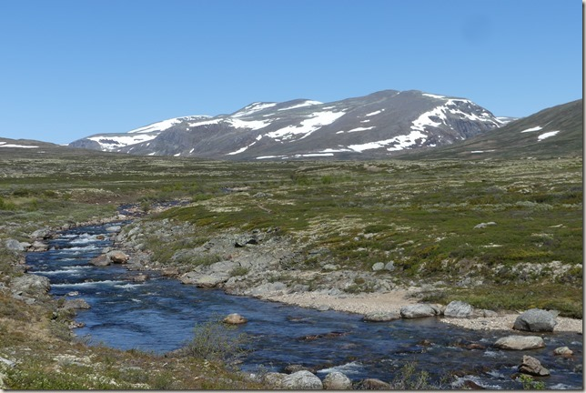 Parc National de Dovrefjell (61)