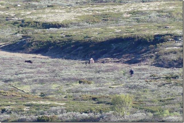 Parc National de Dovrefjell (8)