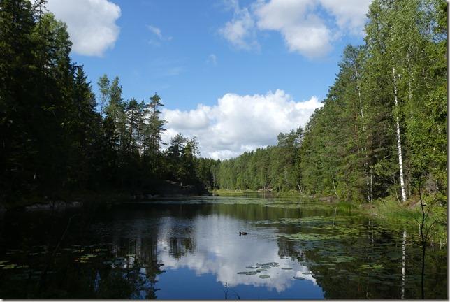 Balade en forêt (15)
