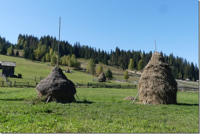 Bucovine - Ciocanesti- Chez Vladimir (31)