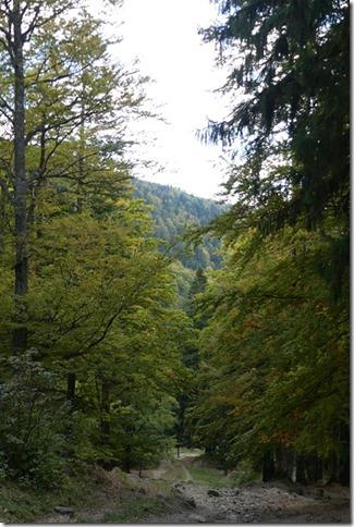 Vallée de Busteni (59)