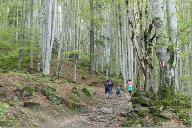 Vallée de Busteni (62)