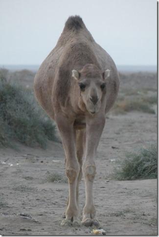 Autour Kashan - désert (48)