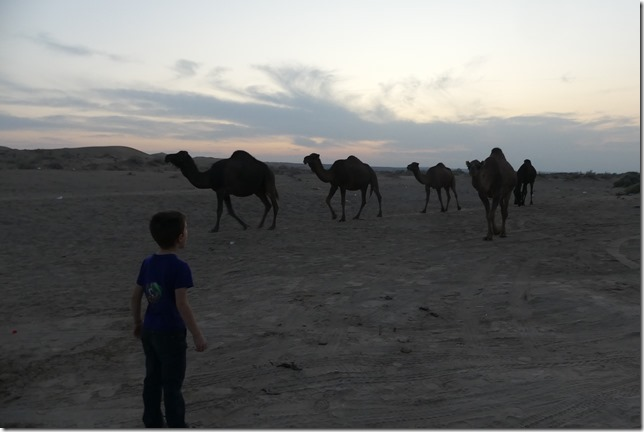 Autour Kashan - désert (50)