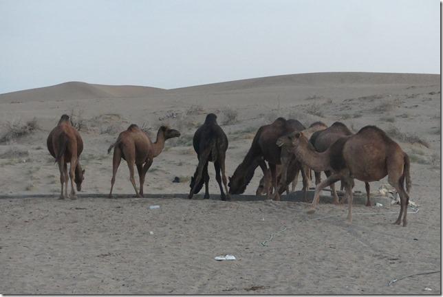 Autour Kashan - désert (54)