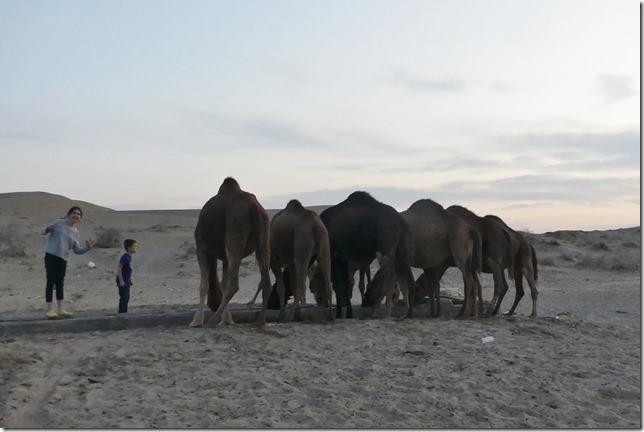 Autour Kashan - désert (57)