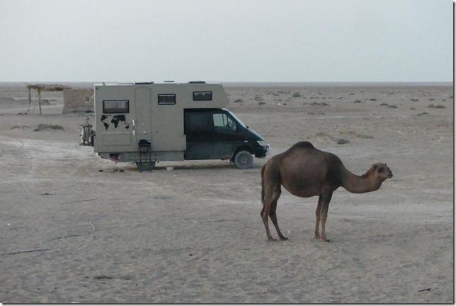 Autour Kashan - désert (74)