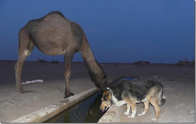 Autour Kashan - désert (80)