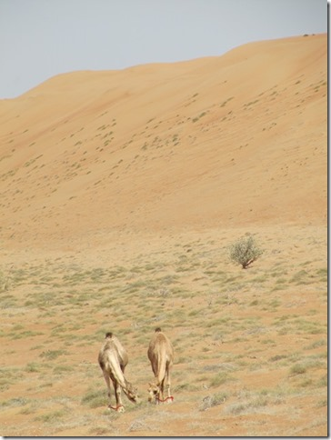 Dans le désert ! (113)