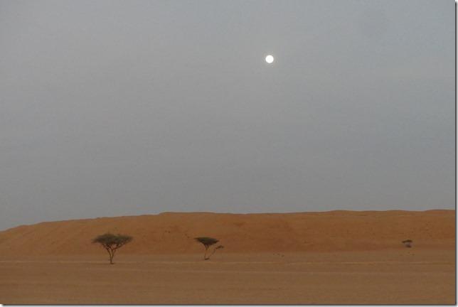 Dans le désert ! (12)