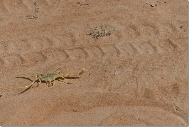 Dans le désert (165)