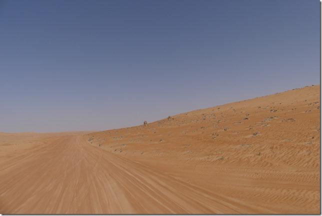 Dans le désert (172)