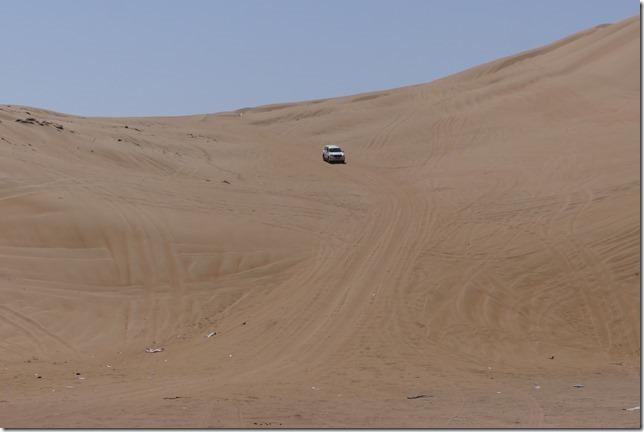 Dans le désert (176)