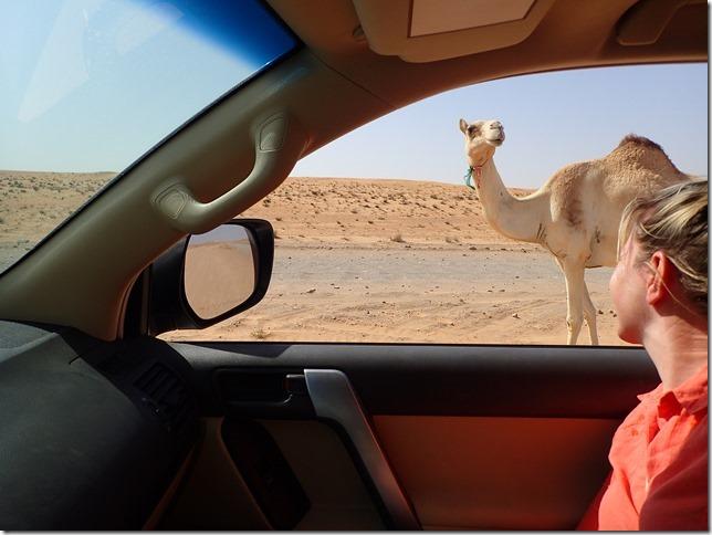 Dans le désert (1)