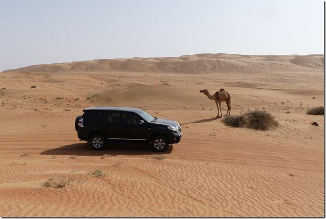 Dans le désert ! (57)
