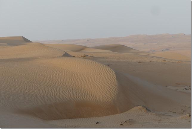 Dans le désert (74)