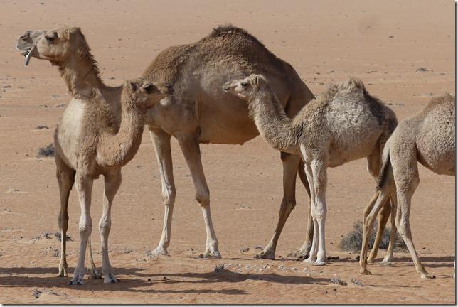 Dans le désert (89)