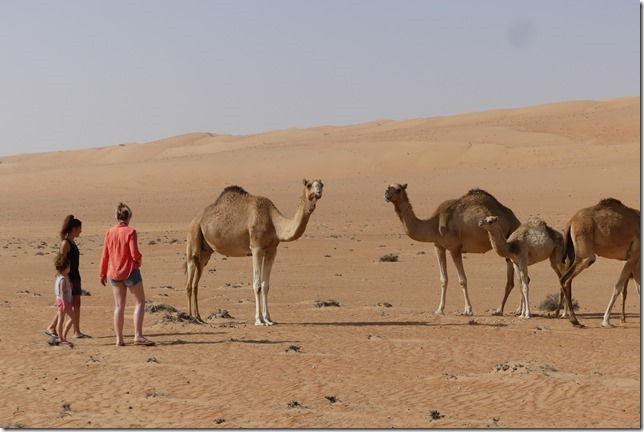 Dans le désert (93)