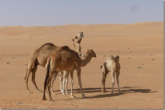 Dans le désert (97)
