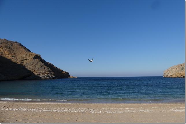 Sur la côte (16)