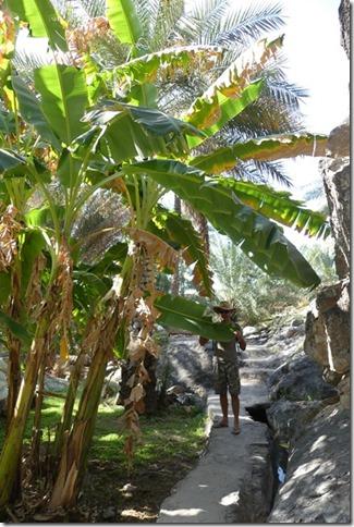 Village de Misfat (6)