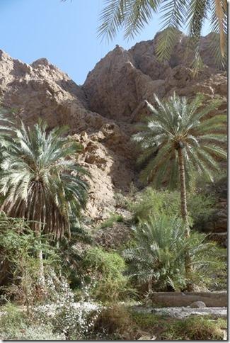 Wadi Shab (20)