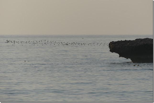 Al Fizayah beach (51)