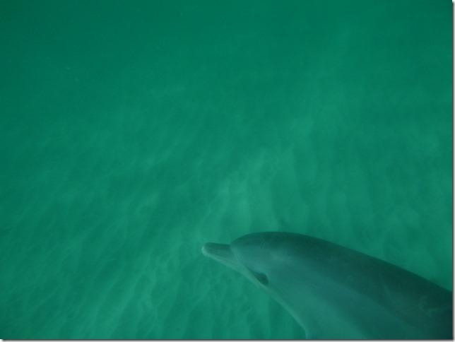 Plage aux dauphins (1)