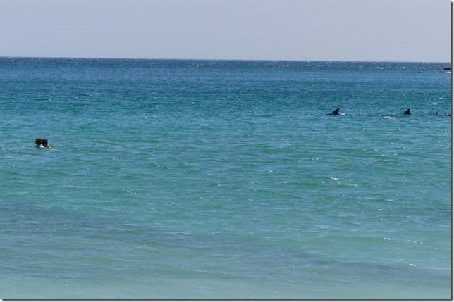 Plage aux dauphins (24)