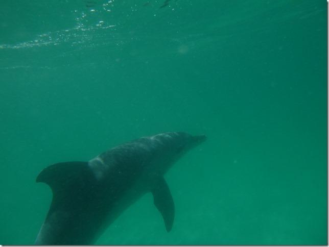 Plage aux dauphins (2)