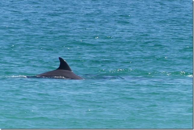 Plage aux dauphins (31)