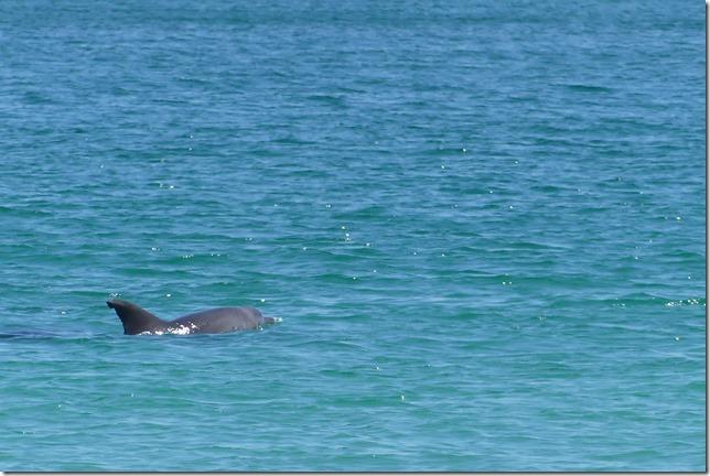 Plage aux dauphins (34)