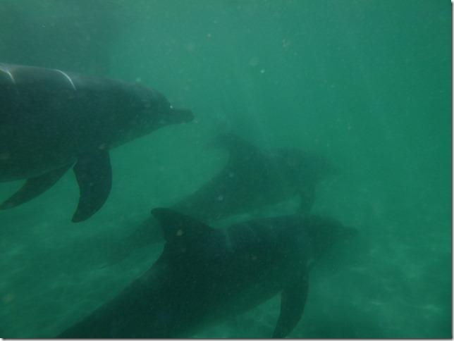 Plage aux dauphins (9)