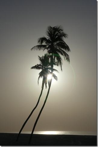 Salalah beach (10)
