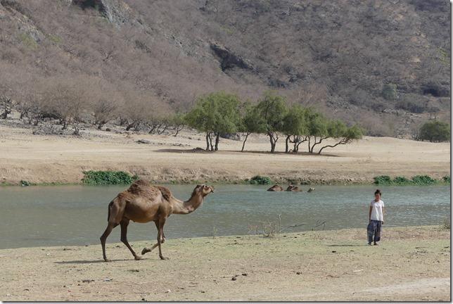 Wadi Darbat (21)