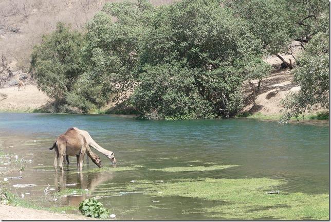 Wadi Darbat (3)