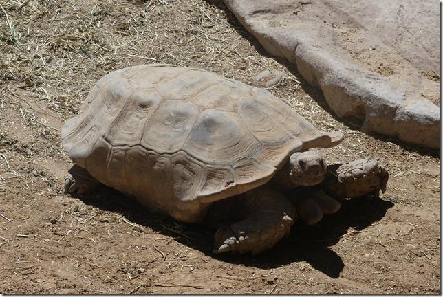 Zoo Al Ain (102)